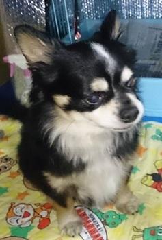 石岡の保護犬.jpg